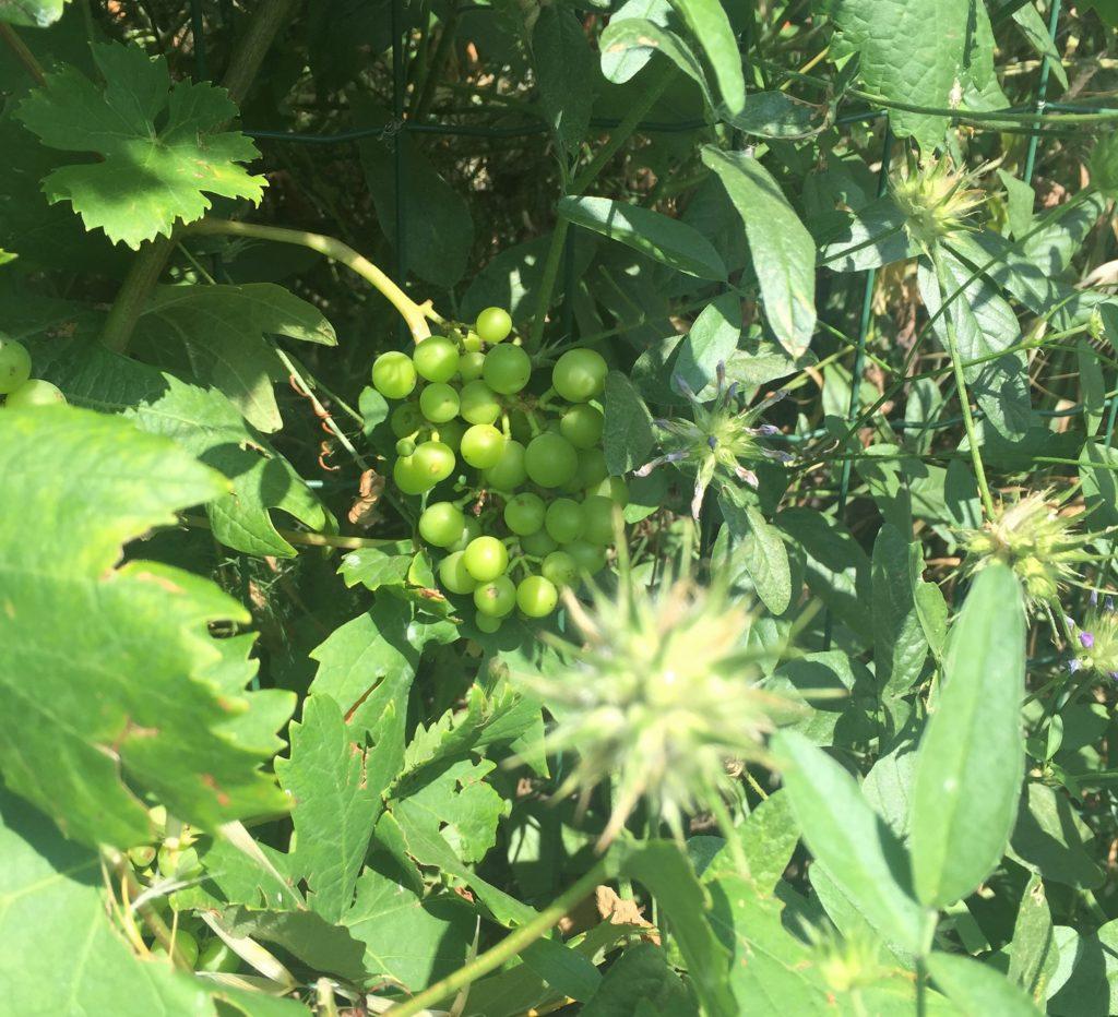vineyard walk cinque terre