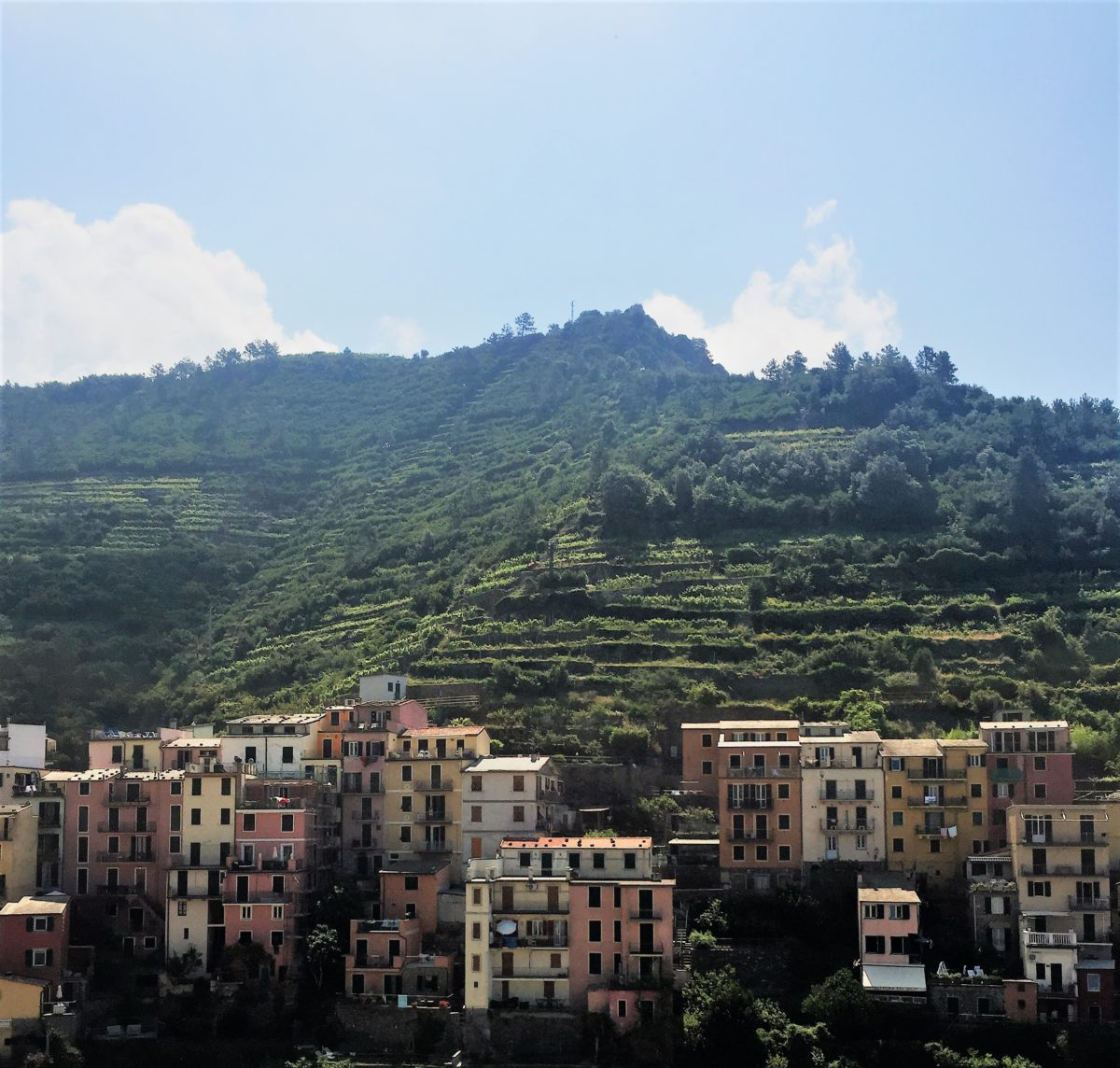 Vineyard Walk in the Cinque Terre | Amazing Views